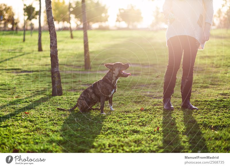 Frau Hund schön Baum Tier Lifestyle Erwachsene Glück Zusammensein Freundschaft Park sitzen authentisch niedlich Warmherzigkeit Boden