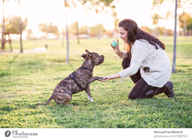 Frau Natur Hund schön grün Hand Tier Lifestyle Erwachsene Glück Gras Spielen Freundschaft Park Lächeln niedlich