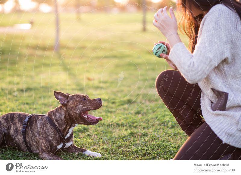 Frau Natur Hund schön grün Tier Freude Lifestyle Erwachsene Glück Gras Zusammensein Freundschaft Park Lächeln niedlich