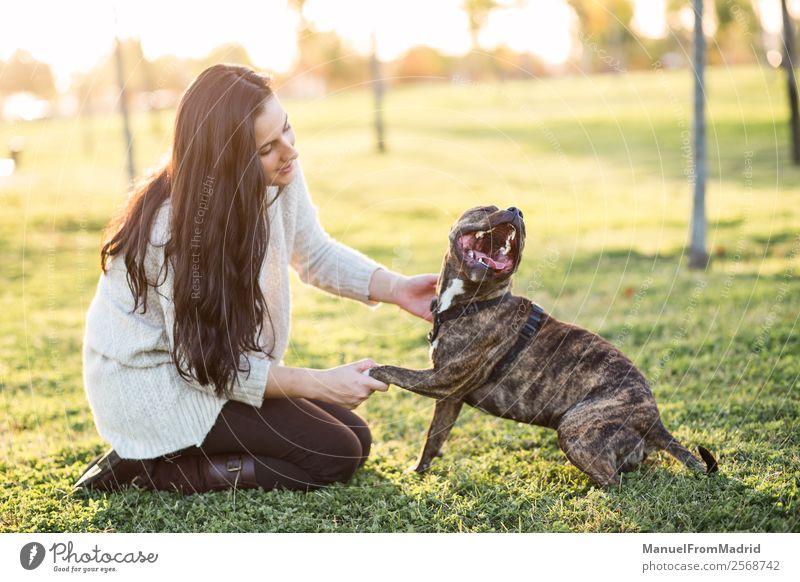 fröhliche Frau und Hund schütteln Hand und Pfote Lifestyle Glück schön Spielen Erwachsene Freundschaft Natur Tier Gras Park Haustier Lächeln niedlich grün loyal
