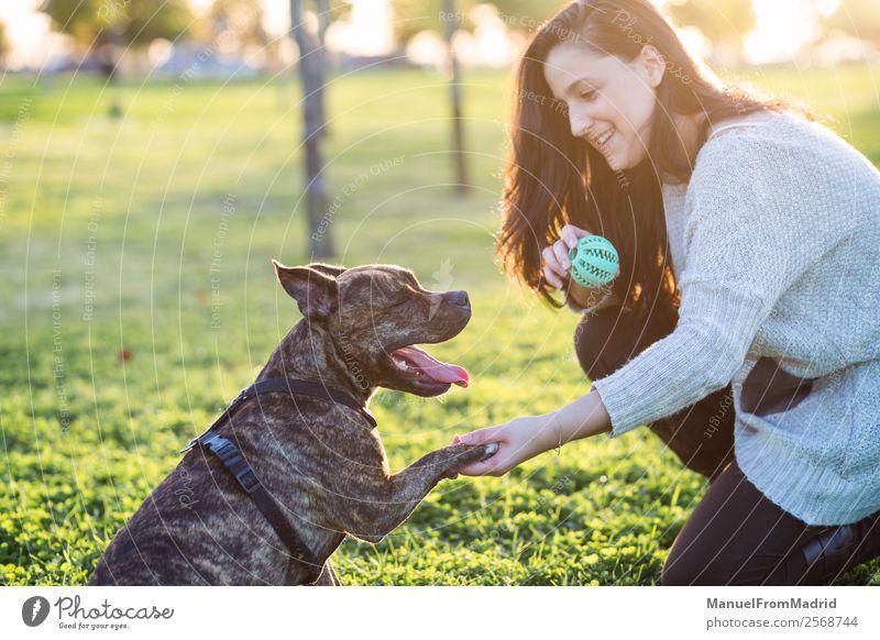 fröhliche Frau und Hund schütteln Hand und Pfote Lifestyle Glück schön Spielen Erwachsene Freundschaft Natur Tier Gras Park Haustier Lächeln niedlich grün
