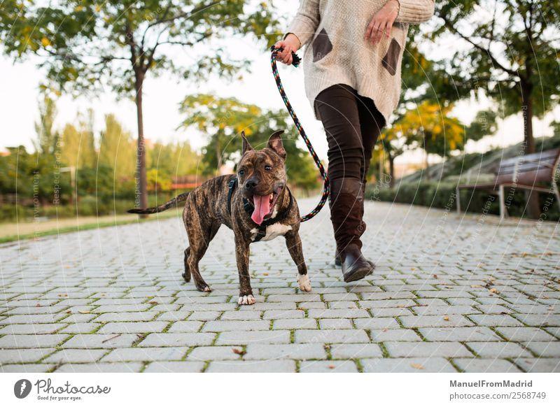 Frau Hund schön Baum Tier Lifestyle Erwachsene Zusammensein Freundschaft Park authentisch laufen niedlich Boden Schutz Sicherheit