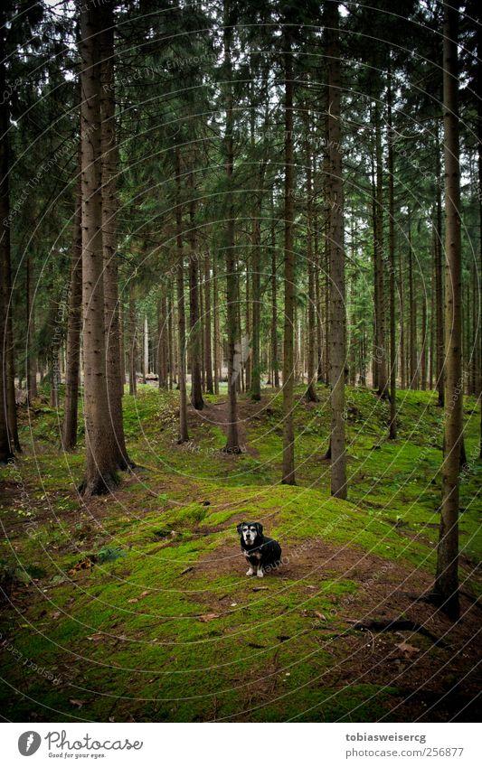Wanna enter my district?! Natur Landschaft Herbst Baum Moos Hügel Hund grün achtsam Wachsamkeit ruhig Abenteuer Farbfoto Außenaufnahme Menschenleer Tag Kontrast