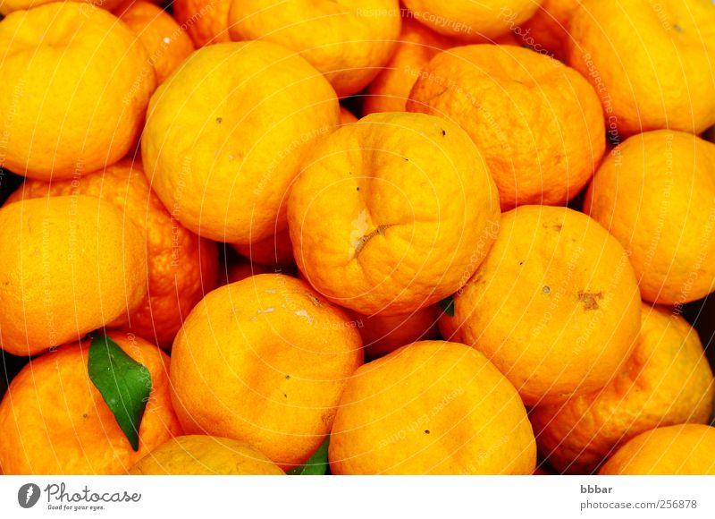 Frische orangefarbene Früchte Lebensmittel Frucht Vegetarische Ernährung Saft Blatt frisch saftig sauer gelb Farbe Zitrusfrüchte Vitamin reif organisch