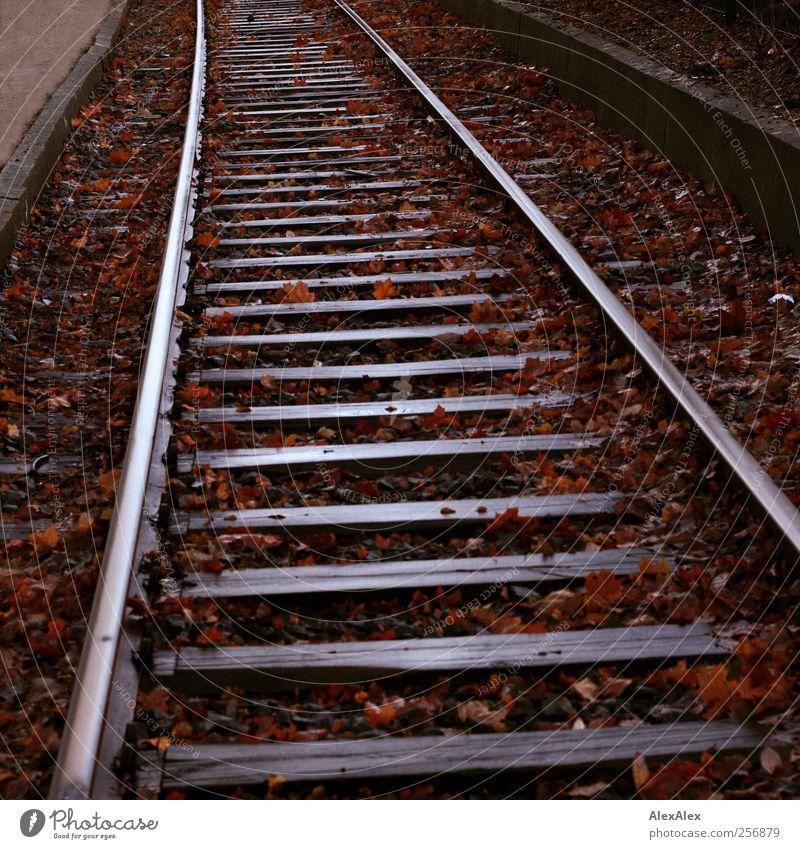 auf die schiefe Bahn alt Ferien & Urlaub & Reisen Blatt Herbst Landschaft grau Bewegung Wege & Pfade Metall braun Verkehr Eisenbahn trist