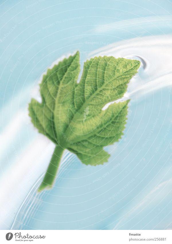 Feigenblatt Wasser blau grün Blatt Bewegung Im Wasser treiben