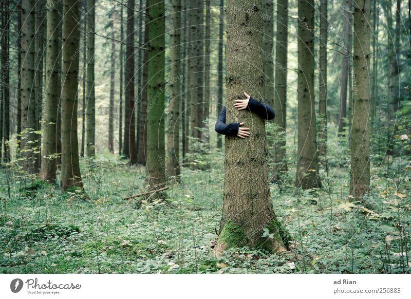 nächstenliebe Mensch Natur Hand Baum Wald Herbst Gras Arme Baumstamm Geborgenheit Umarmen Naturliebe