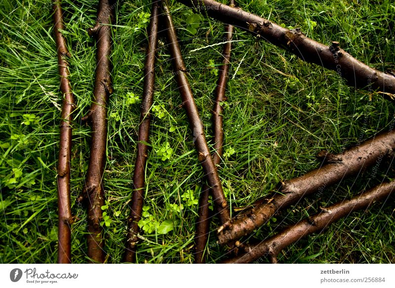 Das Haus vom Nikolaus (Fragment) Natur grün Baum Pflanze Blume Sommer Blatt Erholung Wiese Umwelt Spielen Holz Gras Garten Park Freizeit & Hobby