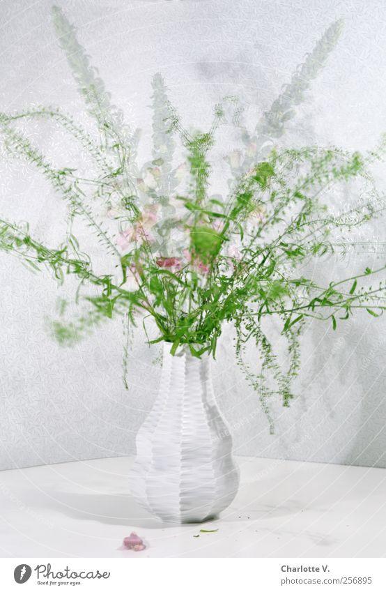 Blumenstrauß Pflanze Vase Blumenvase Porzellanvase Bewegung Blühend stehen Tanzen verblüht ästhetisch elegant frisch grün rosa weiß Leben bizarr
