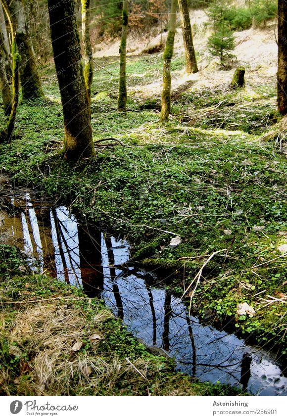Bächlein Umwelt Natur Landschaft Pflanze Erde Luft Wasser Himmel Sommer Wetter Schönes Wetter Baum Gras Sträucher Moos Blatt Grünpflanze Wald hoch blau grün
