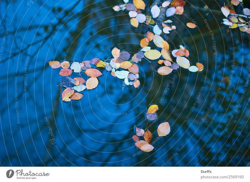 Herbstkonfetti am Himmel Natur Wasser Wetter Blatt Herbstlaub Zweig Zweige u. Äste Teich Pfütze Herbstlandschaft schön blau Stimmung Romantik ruhig