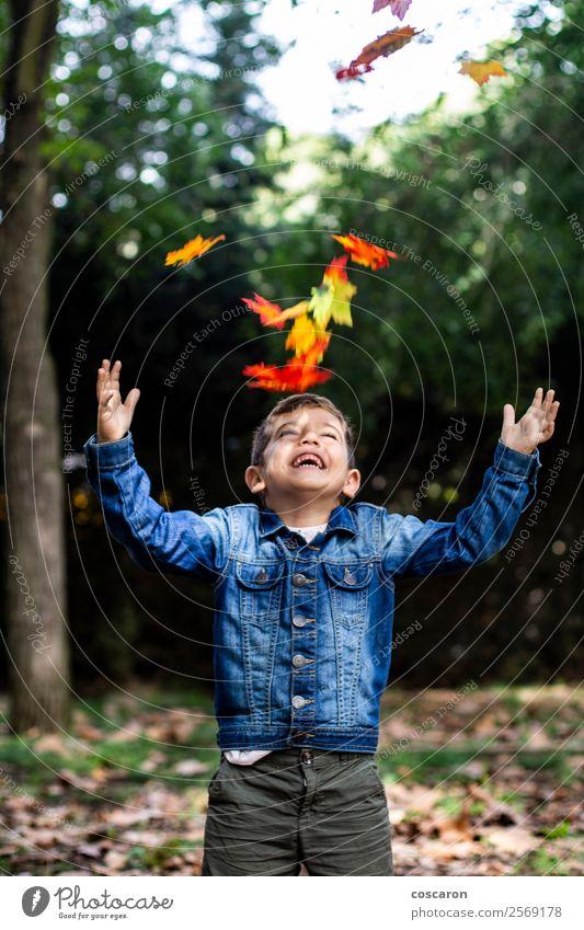 Netter Junge überrascht von einigen Blättern, die im Herbst fallen. Lifestyle Freude Glück schön Spielen Garten Kind Mensch Baby Kleinkind Kindheit 1 3-8 Jahre