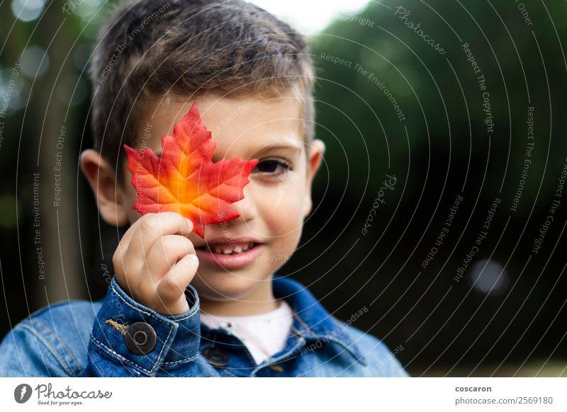 Süßer Junge zeigt im Herbst ein Blatt im Wald. Lifestyle Freude Glück schön Gesicht Spielen Berge u. Gebirge Garten Bildung Kind Mensch Kleinkind Mann