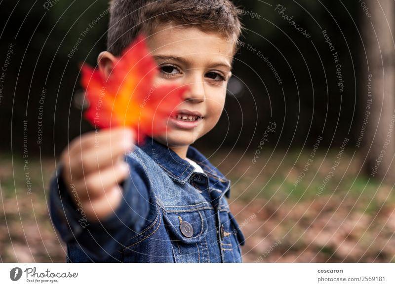 Kind Mensch Natur Mann schön Farbe Hand rot Blatt Freude Wald Gesicht Lifestyle Erwachsene gelb Herbst