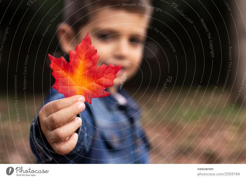Süßer Junge zeigt im Herbst ein Blatt im Wald. Lifestyle Freude Glück schön Gesicht Spielen Garten Kind Mensch Kleinkind Mann Erwachsene Kindheit Hand 1