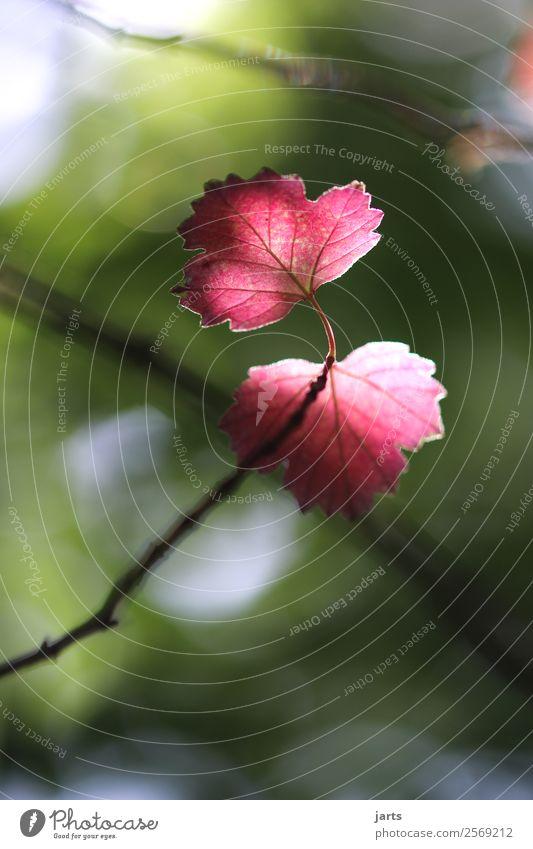 herbstfarbe Natur Pflanze grün Baum rot Blatt ruhig Wald Herbst natürlich hell frisch Schönes Wetter Hoffnung Gelassenheit positiv