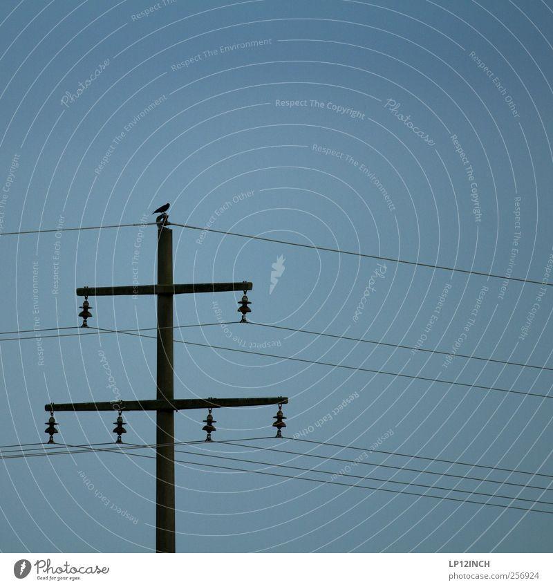 Mastvogel Kabel Technik & Technologie Energiewirtschaft Tier Vogel 1 kalt Strommast Elektrizität Farbfoto Außenaufnahme Menschenleer Textfreiraum oben Tag