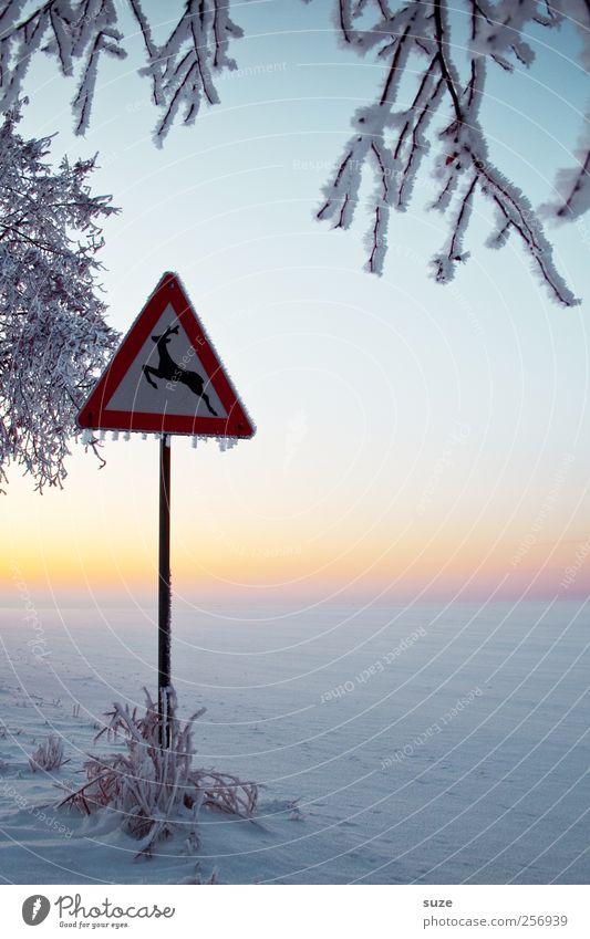 Reebok Umwelt Natur Landschaft Urelemente Himmel Wolkenloser Himmel Horizont Winter Klima Schönes Wetter Eis Frost Schnee Verkehr Verkehrswege Verkehrszeichen