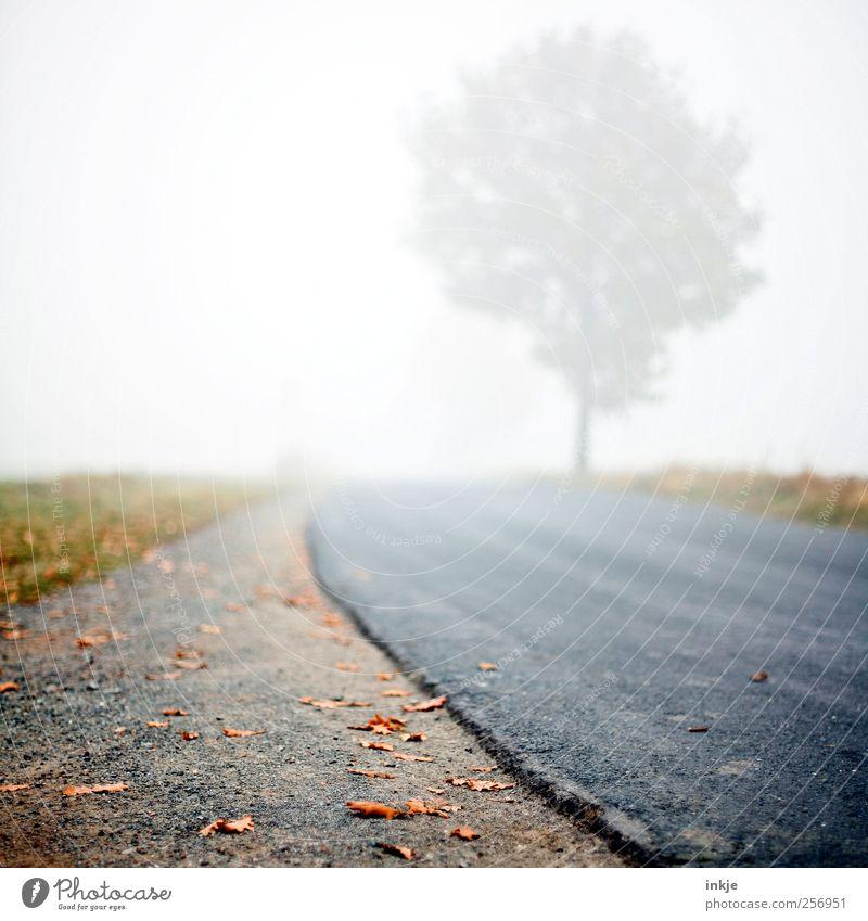 road to nowhere Himmel Natur Baum Blatt Einsamkeit Ferne Herbst Straße Wiese kalt dunkel Umwelt Gefühle Wege & Pfade Stimmung Nebel