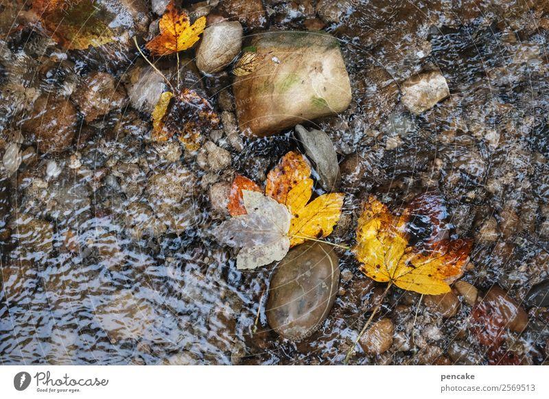 wasserfarben Urelemente Erde Sand Wasser Herbst Blatt Wald Flussufer Stein authentisch Bewegung Einsamkeit Frieden Leben Natur ruhig Wandel & Veränderung