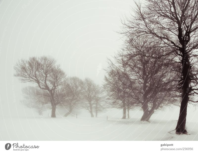 Winternebelland Himmel Natur Baum Pflanze Ferien & Urlaub & Reisen ruhig Einsamkeit Erholung Schnee Umwelt Landschaft Wege & Pfade Nebel Urelemente