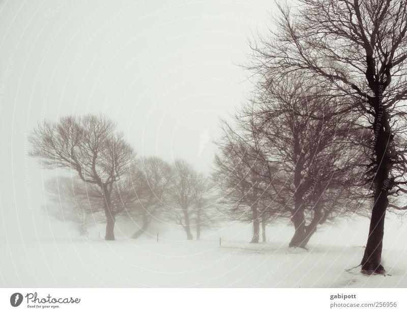 Winternebelland Himmel Natur Baum Pflanze Ferien & Urlaub & Reisen Winter ruhig Einsamkeit Erholung Schnee Umwelt Landschaft Wege & Pfade Nebel Urelemente Vergänglichkeit