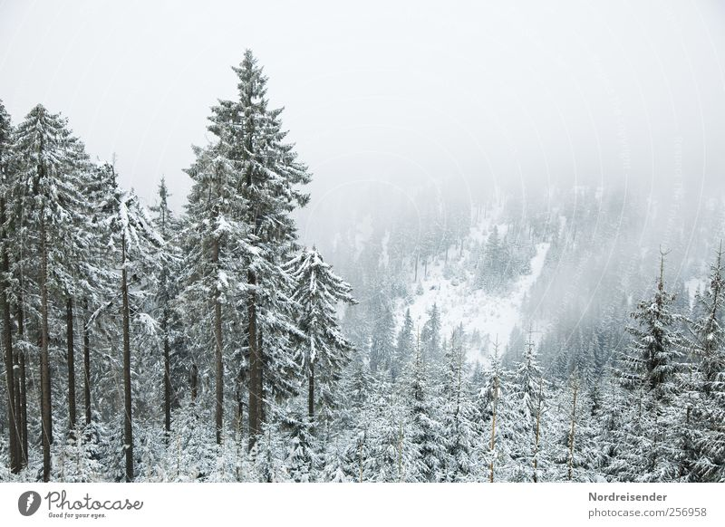 Der erste Schnee Natur Pflanze Winter ruhig Wald Erholung Schnee Umwelt Landschaft Berge u. Gebirge Wetter Eis Wind Nebel Ausflug Klima
