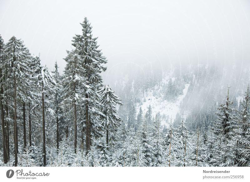 Der erste Schnee Sinnesorgane Erholung ruhig Ausflug Winter Winterurlaub Berge u. Gebirge Natur Landschaft Pflanze Klima Wetter Wind Nebel Eis Frost Wald