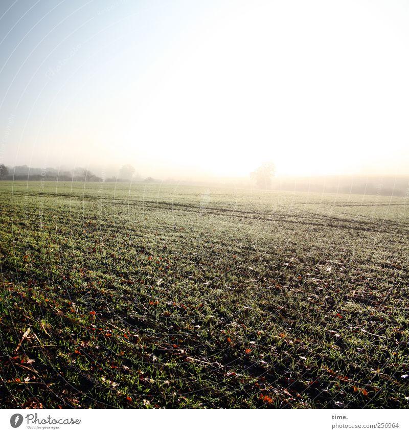 Flurlicht Umwelt Natur Landschaft Pflanze Erde Wolkenloser Himmel Herbst Nutzpflanze Feld ästhetisch Farbfoto Menschenleer Textfreiraum oben Sonnenlicht