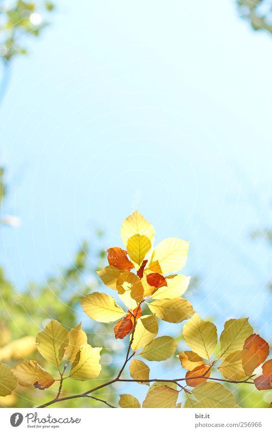 [Chamasülz 2011]...aus der Mitte.. Himmel Natur blau Baum Pflanze Umwelt gelb Wärme Herbst Luft gold Schönes Wetter Herbstlaub Wolkenloser Himmel herbstlich Herbstfärbung