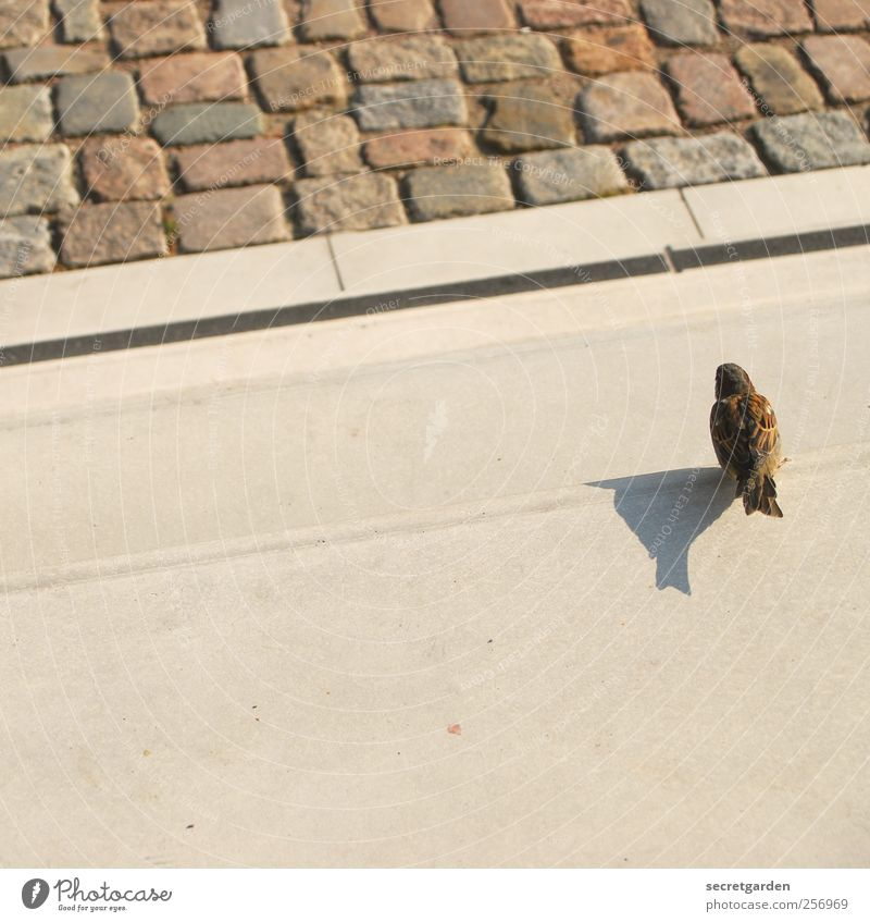 innehalten. schön Sommer Tier Einsamkeit klein braun Vogel warten Beton Platz Treppe Bauwerk Schönes Wetter Mut Sonnenbad Terrasse