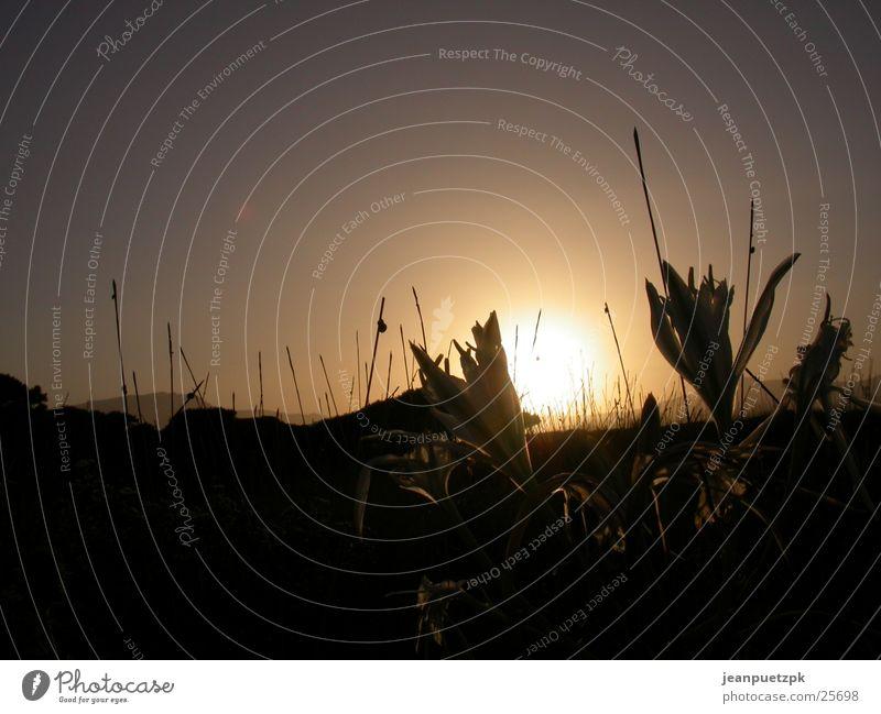 Sardischer Sonnenuntergang 2 Blume Strand Gras Europa Sardinien