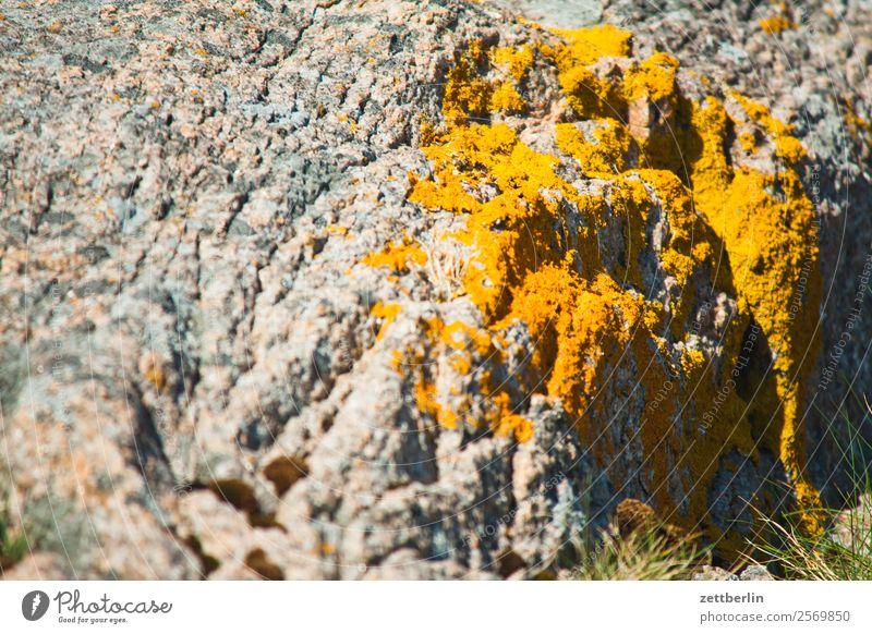 Flechten auf Felsen Polarmeer Europa Ferien & Urlaub & Reisen Fjord Insel Landschaft Lofoten Natur nordisch Norwegen Reisefotografie Schäre Skandinavien