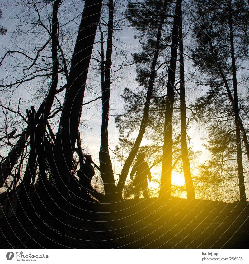 entdecker Mensch Himmel Natur Baum Pflanze Winter Tier Wald Umwelt Landschaft Leben Spielen Freundschaft Kindheit Körper Hütte