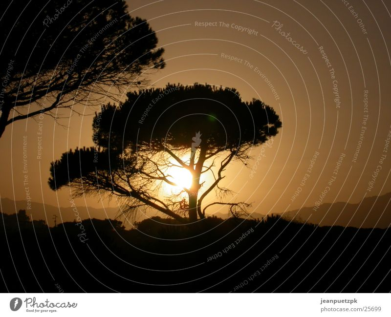 Sardischer Sonnenuntergang Baum Strand Ferien & Urlaub & Reisen Europa Afrika Italien Abenddämmerung Steppe Sardinien