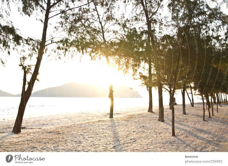 sunrise in thailand Thailand Sand Sandstrand Strand Sonne Gegenlicht Natur Baum Sonnenstrahlen Menschenleer Insel Paradies Ferien & Urlaub & Reisen Einsamkeit
