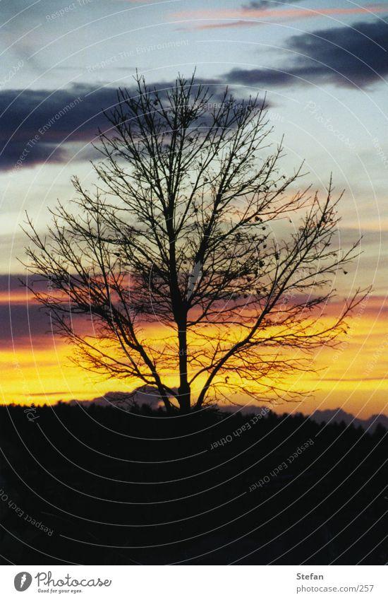 fallen leafs Baum Wolken Sonnenuntergang Romantik Ast Abend romatik Harz