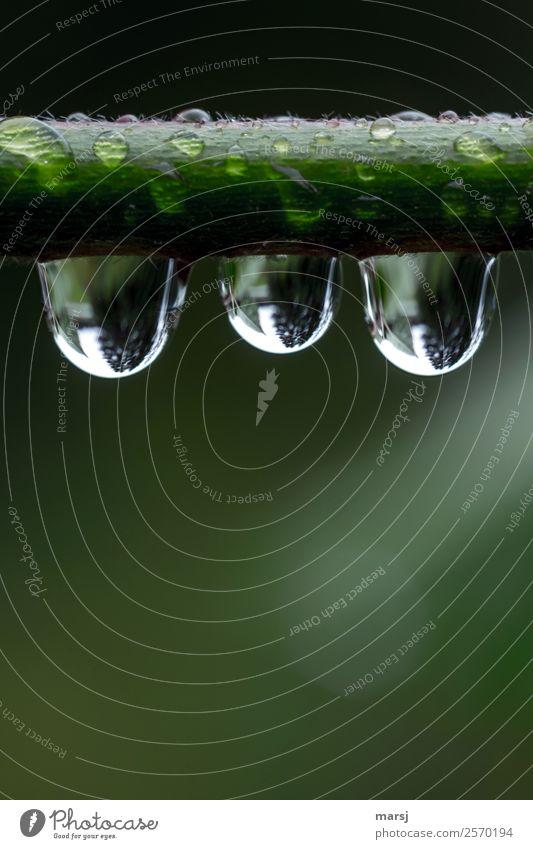 Die Drei Natur Pflanze grün Erholung Leben kalt Traurigkeit natürlich klein außergewöhnlich Zusammensein Freundschaft leuchten Wassertropfen nass Ast
