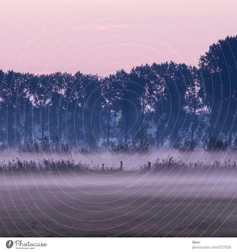 Frühnebel Himmel Natur Baum Pflanze Umwelt Landschaft Landwirtschaft Kontakt Nebelbank Nebelschleier