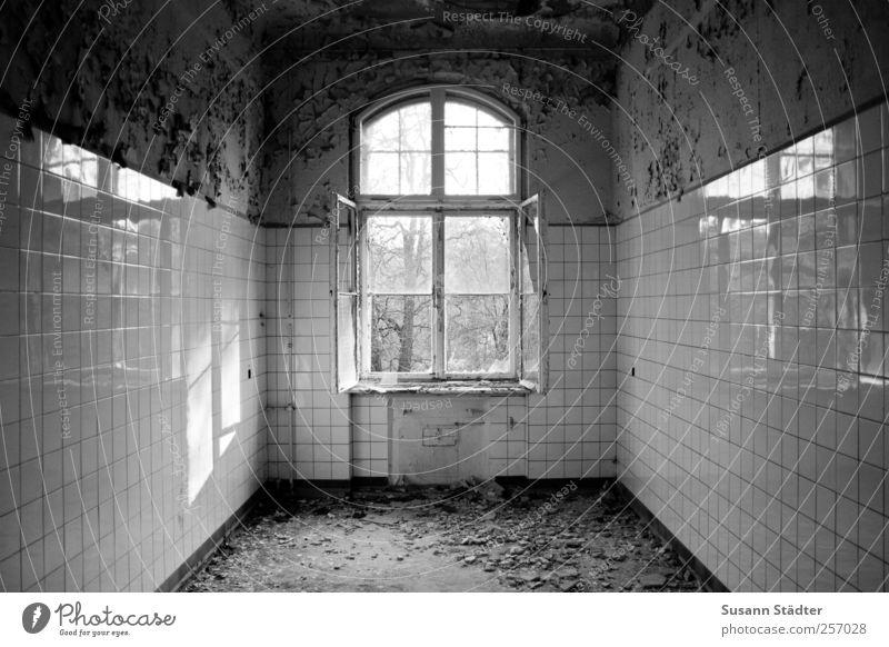 lost. alt ruhig Haus Fenster Fassade offen Küche verfallen Fliesen u. Kacheln Vergangenheit bizarr Erwartung Mittelpunkt abblättern Altbau sparsam