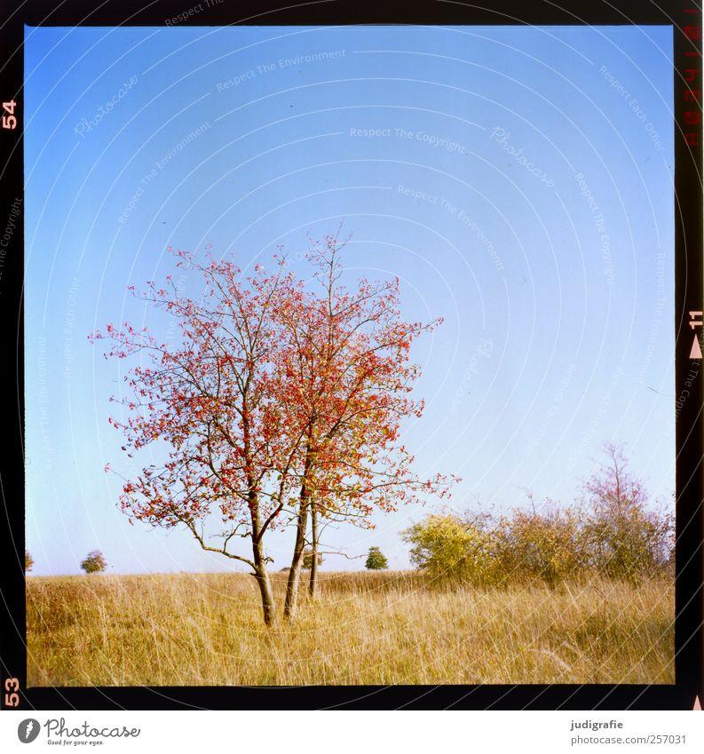 Hannover Umwelt Natur Landschaft Pflanze Wolkenloser Himmel Herbst Baum Gras Park Wiese Wachstum natürlich Blatt zart Farbfoto Außenaufnahme Menschenleer