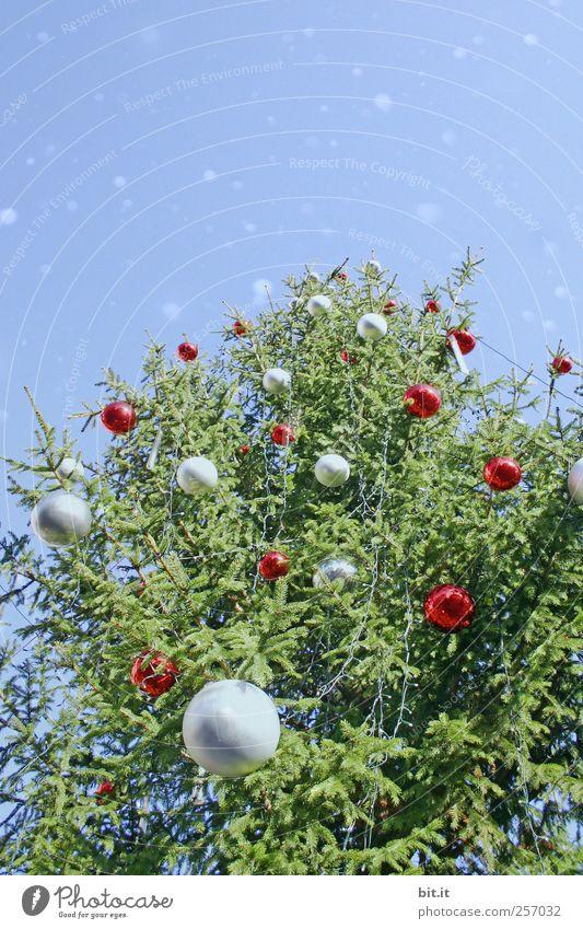 Christbaum Weihnachten & Advent blau grün rot Pflanze Feste & Feiern Weihnachtsbaum Kitsch Tanne Christbaumkugel silber Weihnachtsdekoration