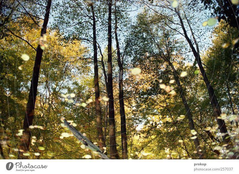 Herbst III Himmel Natur Wasser Baum Pflanze Blatt Wald Erholung Umwelt Landschaft Gefühle See Wetter Wachstum Perspektive