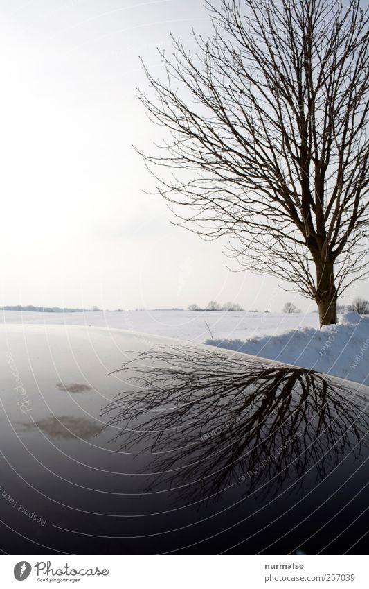 black mirror Natur Baum Winter kalt dunkel Schnee Umwelt Landschaft Stimmung Kunst Eis Freizeit & Hobby Klima Wandel & Veränderung Frost Zeichen