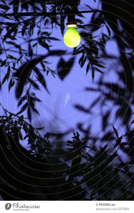 Summernights grün Pflanze dunkel Lampe Weide Glühbirne