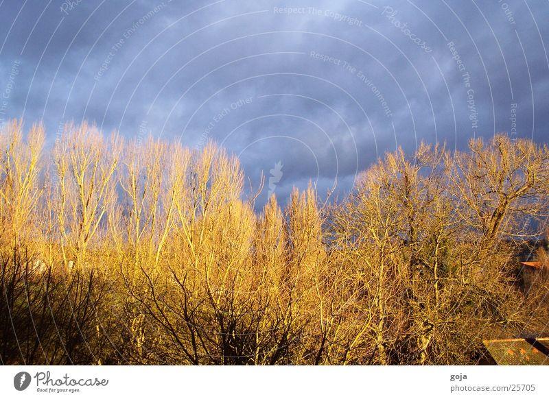 herbstlicht Himmel Baum Wolken Herbst