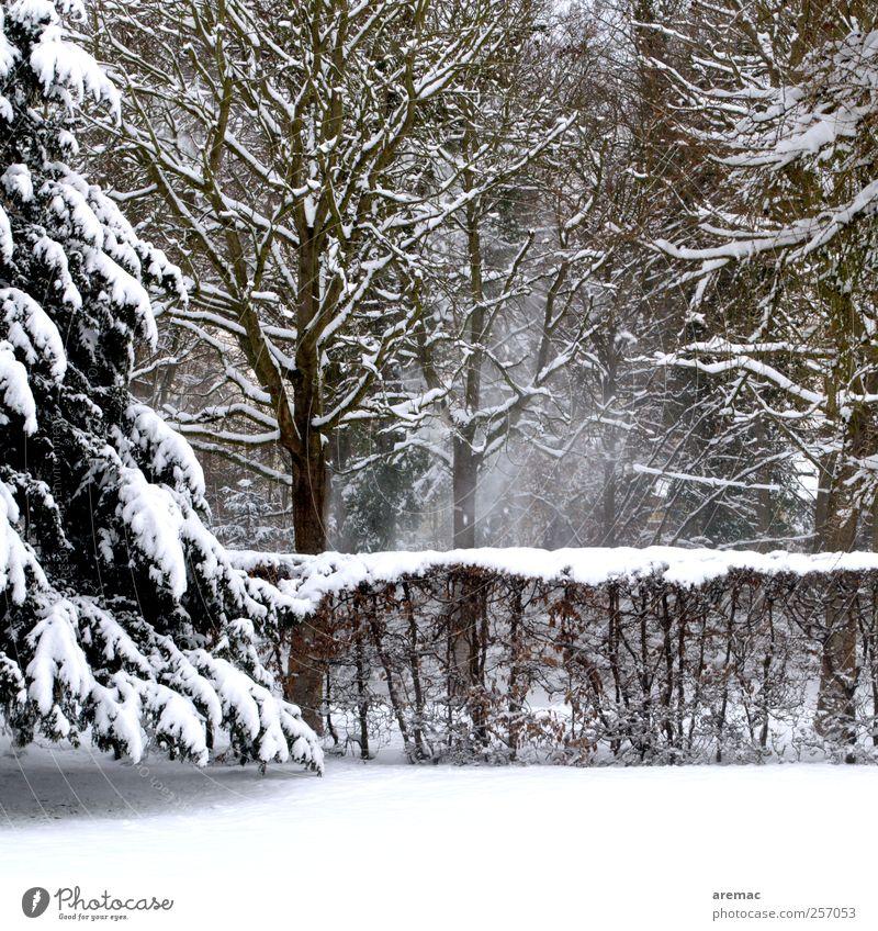 Eingepudert Umwelt Natur Landschaft Winter Wetter Schnee Schneefall Baum Sträucher Garten Wald kalt ruhig Farbfoto Gedeckte Farben Außenaufnahme Menschenleer