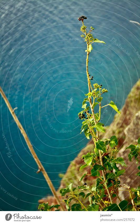 turquoise Umwelt Natur Landschaft Schönes Wetter Sträucher Felsen Küste Meer ruhig Farbfoto mehrfarbig Außenaufnahme Menschenleer Tag Licht Vogelperspektive