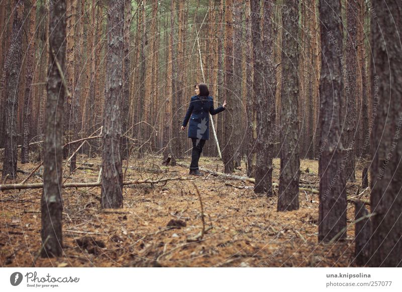 unter bäumen aus papier feminin Junge Frau Jugendliche Erwachsene 1 Mensch 18-30 Jahre Umwelt Natur Landschaft Herbst Winter schlechtes Wetter Baum Wald