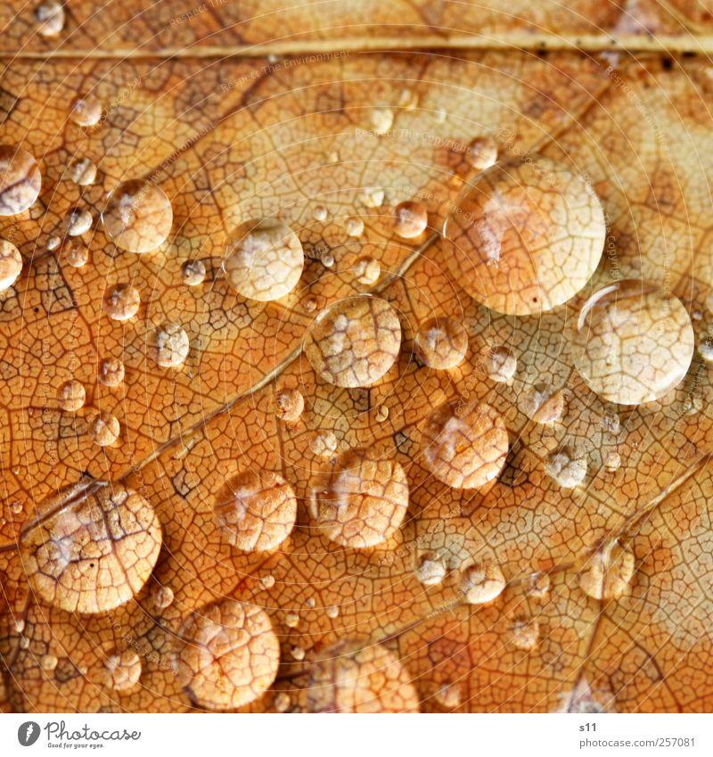 Lupen der Natur Natur Wasser Baum schön Pflanze Blatt Herbst Umwelt Garten Park Regen braun gold elegant nass natürlich